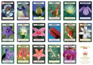 Bush_Flower_Poster